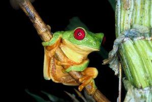 ¿Cómo deshacerse de las ranas de árboles