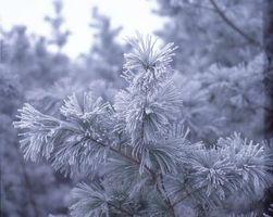 ¿Por qué está convirtiendo mi árbol de la vida gris?