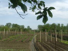 Tipos de enganche del arado jardín