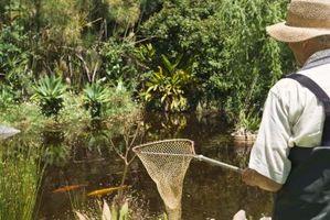 Quiero poner un estanque en mi patio trasero
