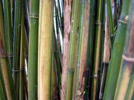 Cómo instalar bambú piso adhesivo