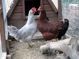 Cómo construir cajas nido para aves de corral