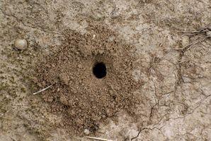 Cómo controlar las colonias de hormigas al aire libre
