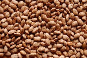 Proyecto Feria de Ciencias en la germinación de la semilla