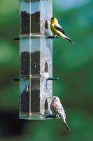 Cómo alimentar a las aves silvestres sin alimentación mirlos