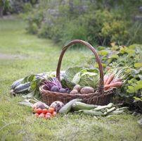 Cuando plantar verduras en el norte de Florida