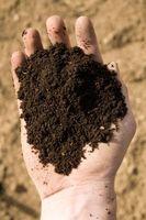 Cómo probar suelo en Northern Essex, Massachusetts