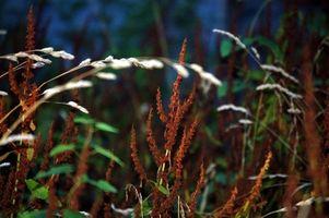 Cuando rociar el herbicida
