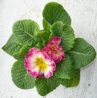 Lista de plantas con flores pequeñas