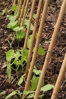 Soportes para plantas vegetales