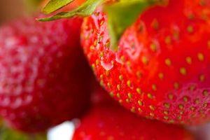 ¿Cuándo es demasiado tarde para iniciar siembra de fresas?