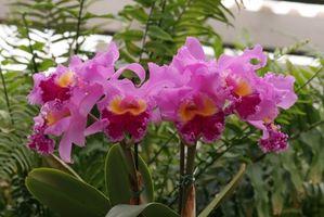 Bichos en mis plantas de la orquídea