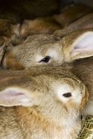 Cómo construir una casa de conejo con una lombriz compostera