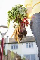 Cómo tratar el oidio en plantas vegetales
