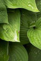 ¿Es mejor agua de lluvia o agua del grifo para regar un jardín?