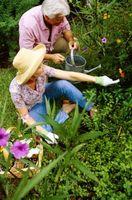 ¿Cómo deshacerse de la tolvas de planta