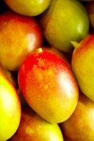 Hongo en la corteza del árbol de Mango