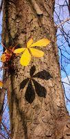 Cortina de árboles indios dando