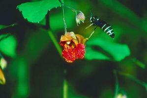 ¿Cómo deshacerse de varios nidos de avispa en un arbusto