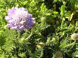Cómo utilizar Top 10 perennes para el jardín