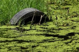 ¿Qué es el oro o las algas de color cafe claro que crece en los lados y parte inferior de mi estanque de jardín?