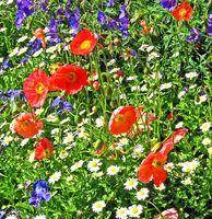 ¿Qué tipo de flores puede ser plantado en abril?