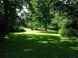 ¿Cómo identificar la hierba en un césped