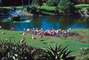 Hierba recomendada para la Florida Central