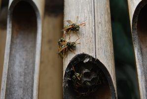 Insecticidas de avispas