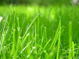 ¿Con qué frecuencia debo regar mi semilla de la hierba?