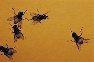 ¿Qué mata moscas pero es seguro de usar?