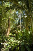 Ideas para decorar una habitación con un tema de la selva
