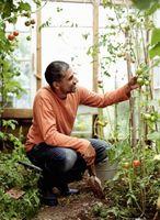 Cómo curar la putrefacción de la flor