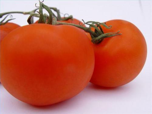 Fertilizante de tomate casera
