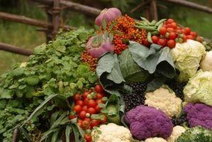 ¿Cultivo de col perjudicará a mi jardín de tomate?
