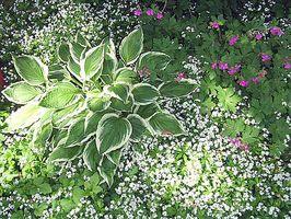 Consejos para hacer un hermoso jardín al aire libre
