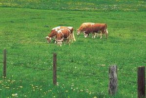 Técnicas para la construcción de cercas de ganado