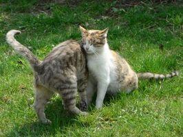Cómo detener a un gato de utilizar su patio para un aseo