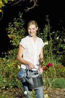 Aceite y jabón para el molde de las plantas