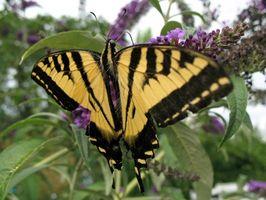 Ideas para colgar las mariposas y blancos cercas del piquete en un dormitorio