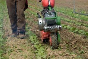 ¿Cómo deshacerse de malas hierbas de Bind