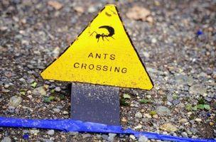 ¿Cómo deshacerse de las hormigas con Ant Bait