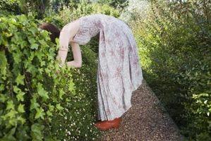 Cómo añadir huesos a un jardín