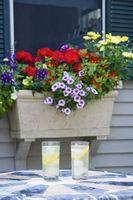 Plantas perennes para jardineras