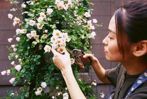 ¿Cómo y cuándo podar Flores perennes