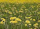 ¿Cómo deshacerse de las malas hierbas con curas naturales
