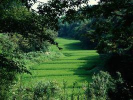 ¿Será la hierba semilla muere después de estar en la tierra y no crece?