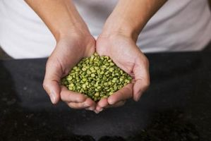 Ideas de proyecto Feria de ciencia para el cultivo de semillas de frijol en líquidos