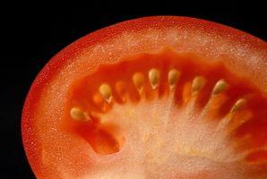 ¿Cómo guardar las semillas para el cultivo de tomates?