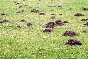 ¿Qué montones de causas de la suciedad en tu patio?